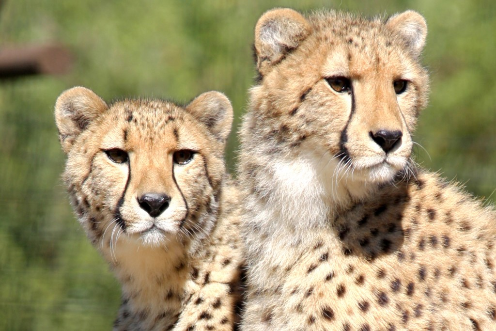 Final Recipients of 2015 Animal Care & Conservation Awards Announced
